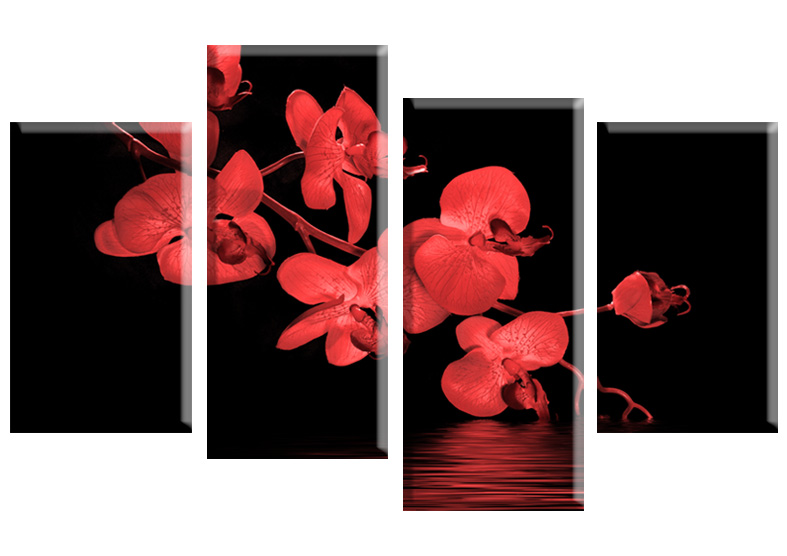 Orchid 22012 red